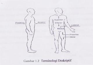 Gambar Terminologi Deskriptif Tubuh