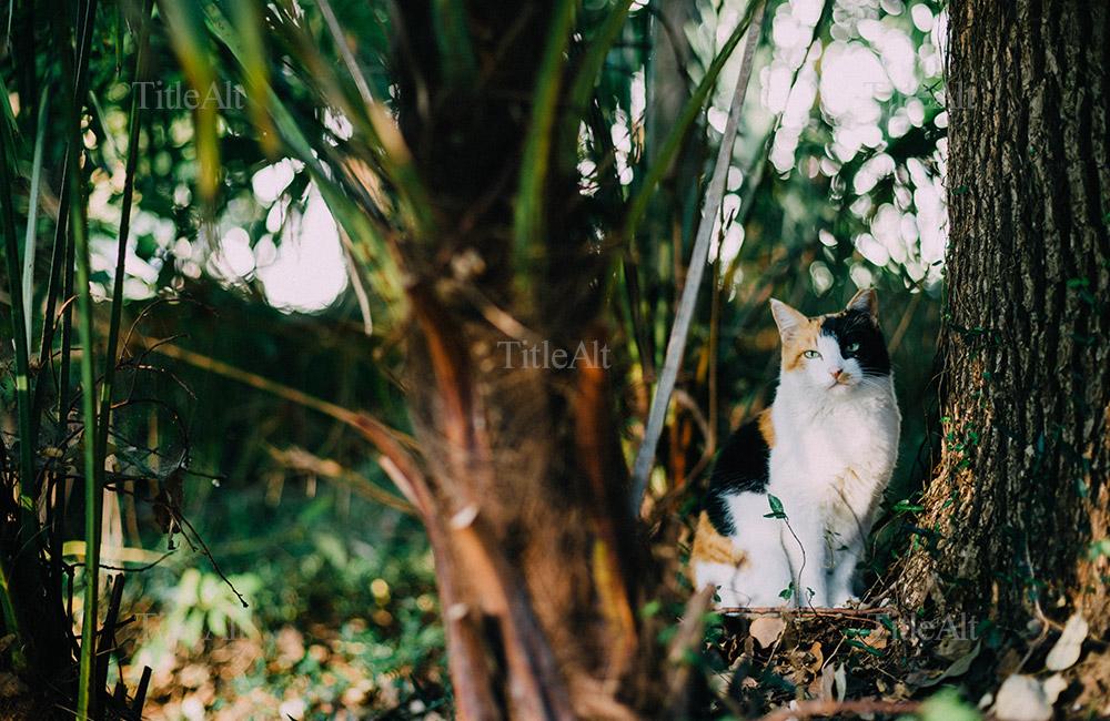 浜離宮にて夕日に照らされた猫の写真