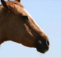 Equine worms as a cause of colic