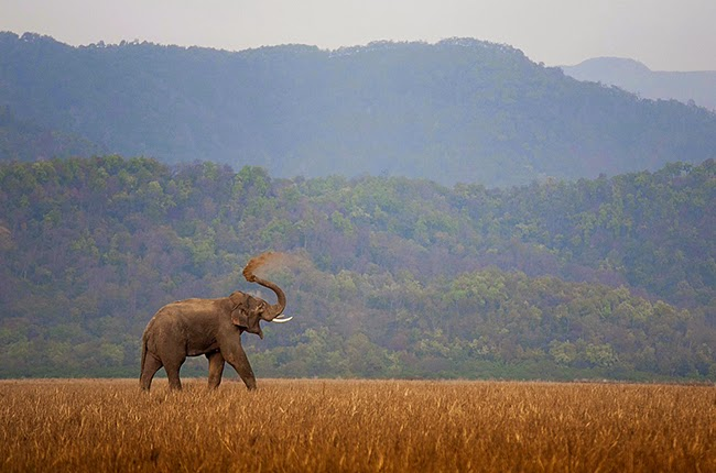 Safari Zone in Corbett National Park
