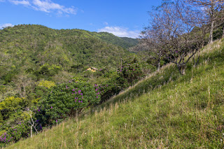 Green Brazilian forest and hillside