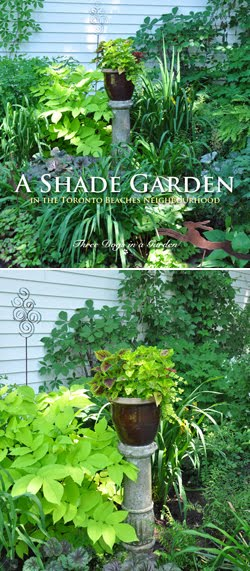 A Shade Garden in the Toronto Beaches Neighbourhood