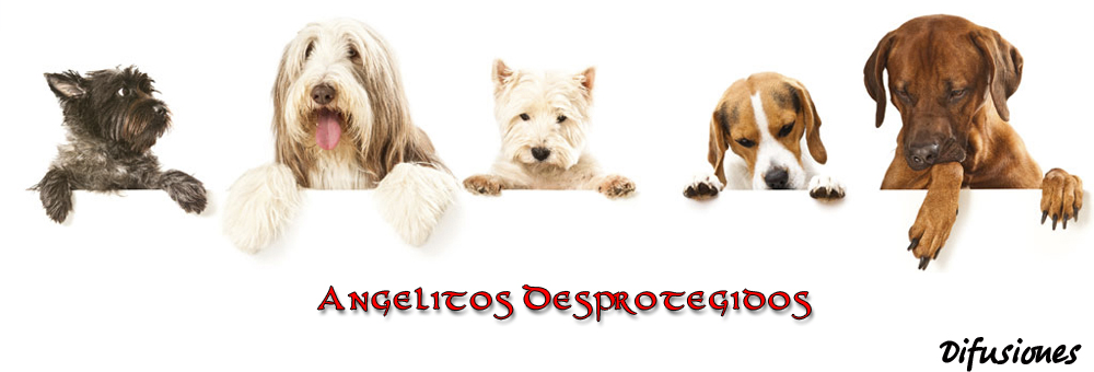 Angelitos Desprotegidos