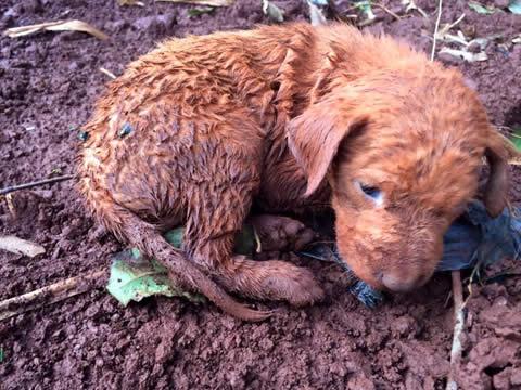 Perritos rescatados en la selva 3