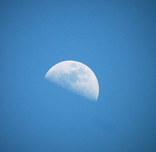 moon, half, daylight