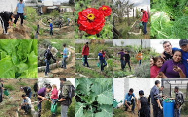 Manutenção da horta