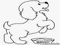 Mewarnai Gambar Anjing Laut Contoh Anak Paud