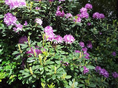 îles-versailles-nantes-mylittlequail-fleurs-zen