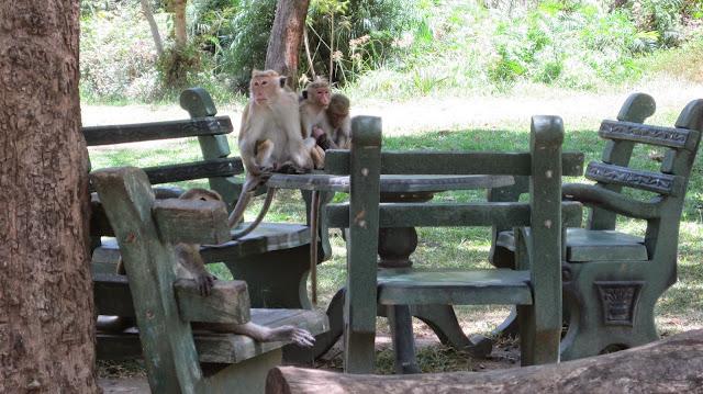 Monos a la salida del Museo Arqueológico en Polonnaruwa (Sri Lanka)