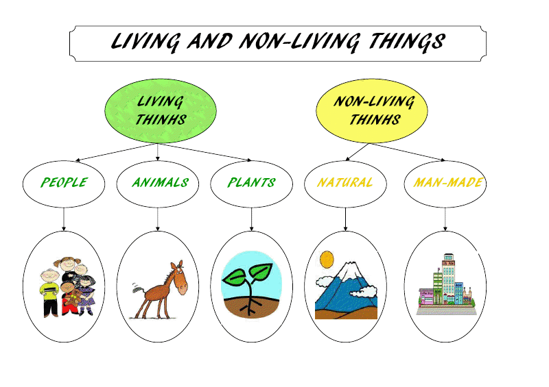 Mrs Egeas Class UNIT 3 LIVING THINGS – Living Vs Nonliving Worksheet