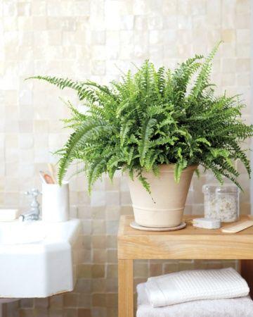La fabrique d co des plantes dans la salle de bain - Plantes pour salle de bain ...