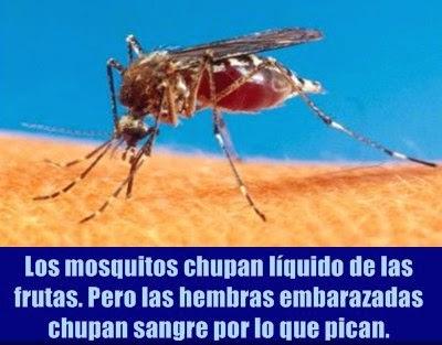 mosquitos-chupadores-sangre