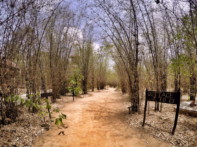 King's Lodge Bandhavgarh tiger reserve pugdandee safari review