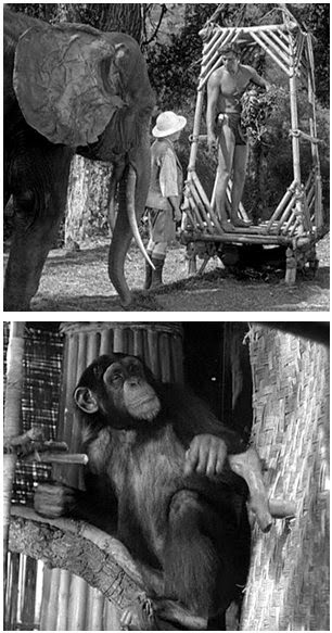 essay of escaped tarzan Disney's portrayal of nonhuman animals in animated films between 2000 and 2010 by oana leventi-perez under the direction of dr marian meyers.