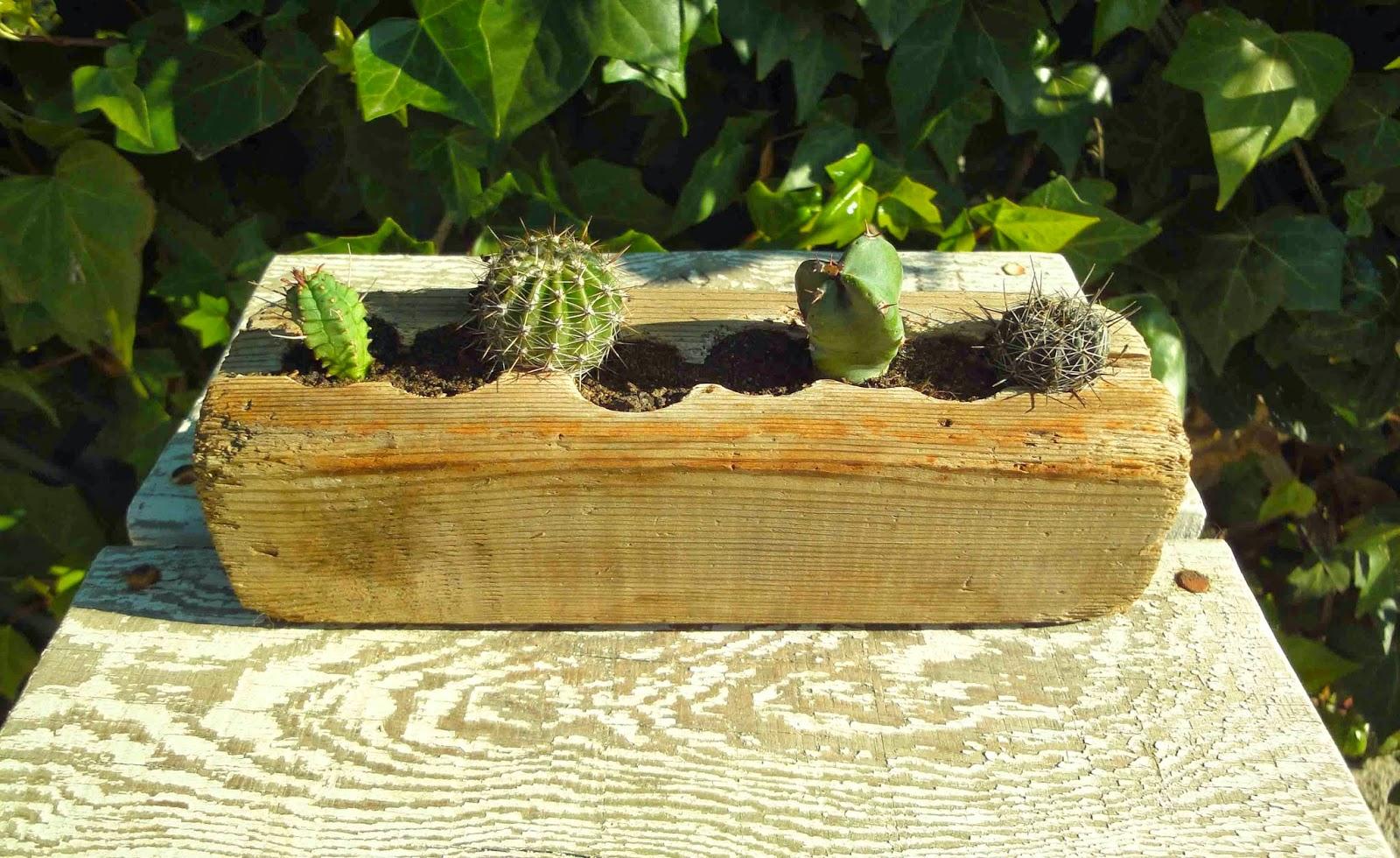 El sello verde maderas cactus - Tiestos de madera ...