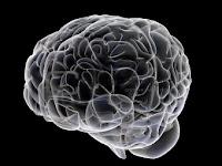 3d Brain5