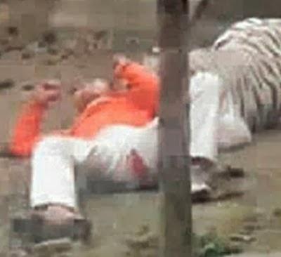suicida-fracasa-tigres-vagos