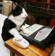 kucing lagi maen komputer