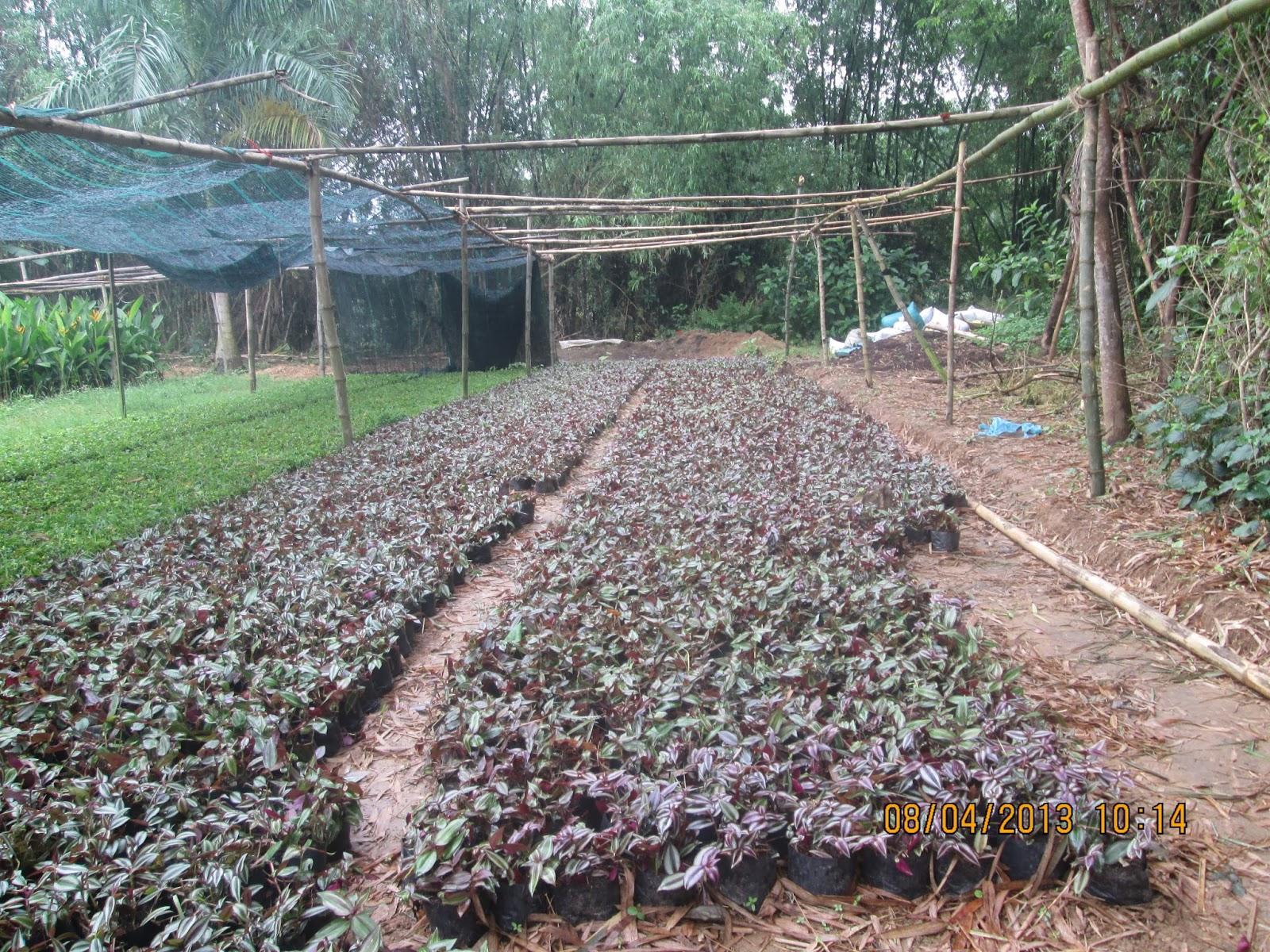 Vườn ươm cây cảnh