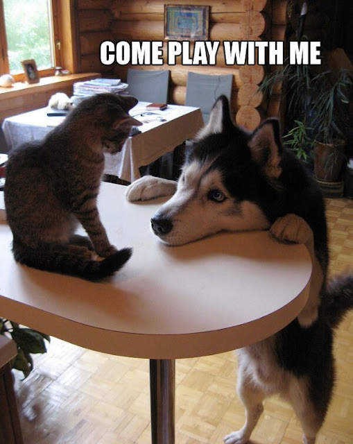 COme play with me dog cat