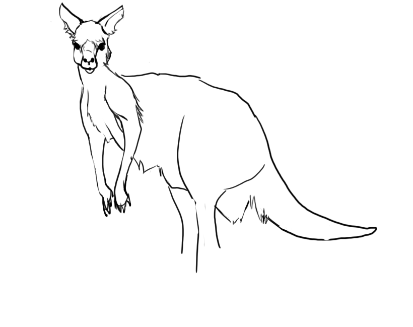 Line Drawing Kangaroo : Ways to use references in digital painting