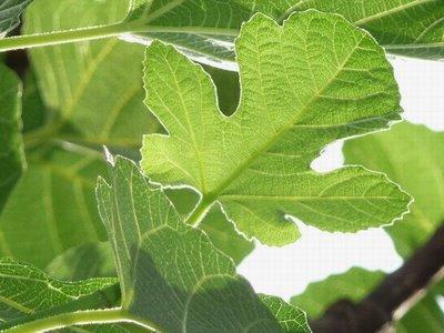 Aprendiendo la sana doctrina hojas ornamentales for Hojas ornamentales