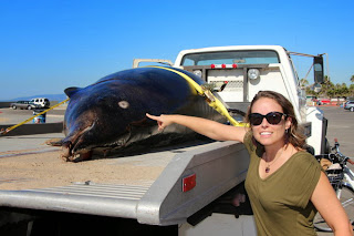 Rare saber-toothed whale washes ashore in Venice Beach