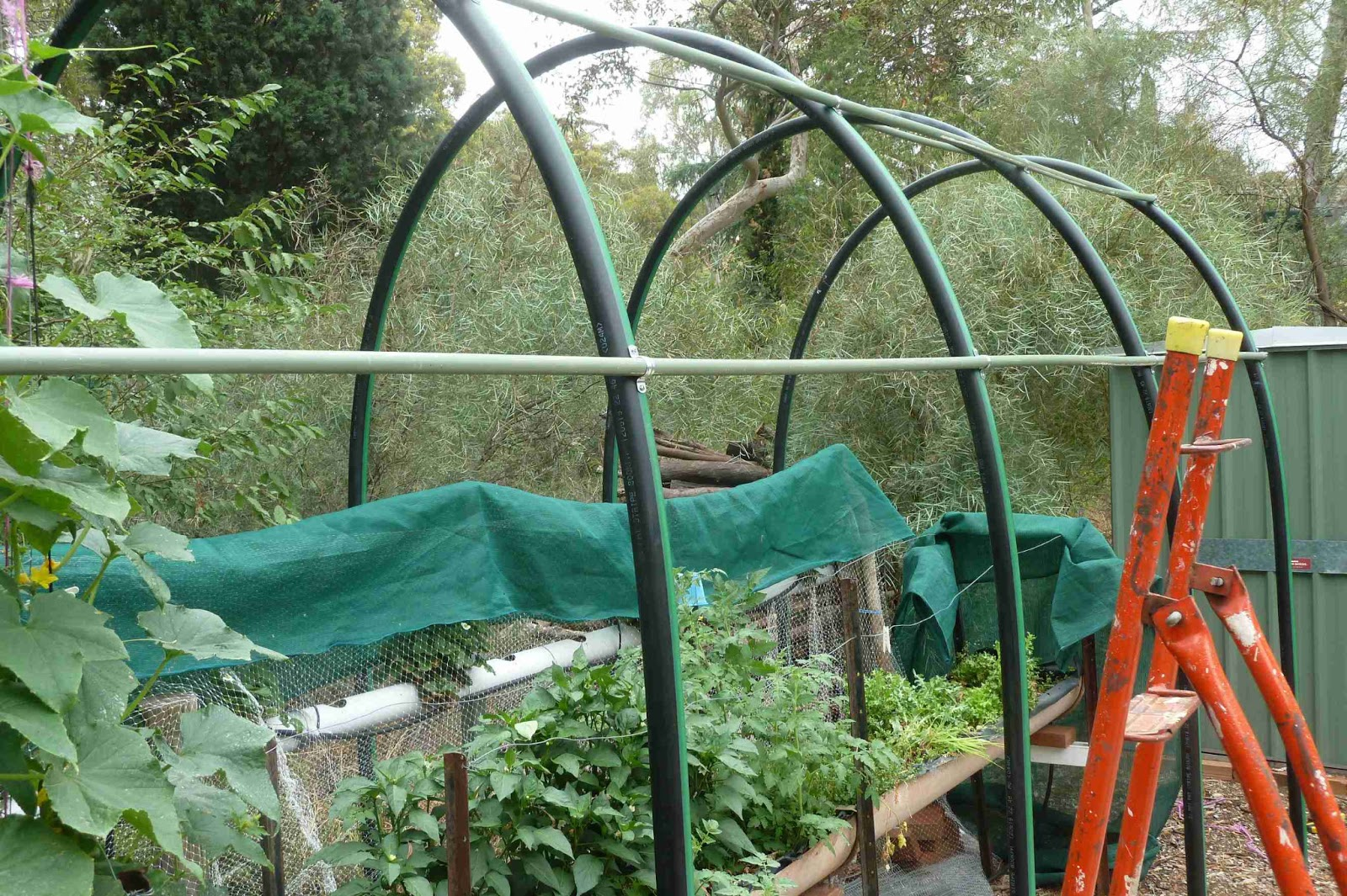 A gardener 39 s musings building a shade house from poly pipe for Pvc pipe shade