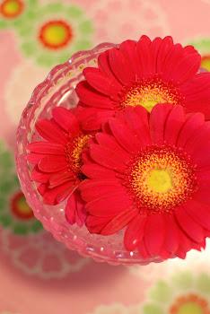 deilige blomster