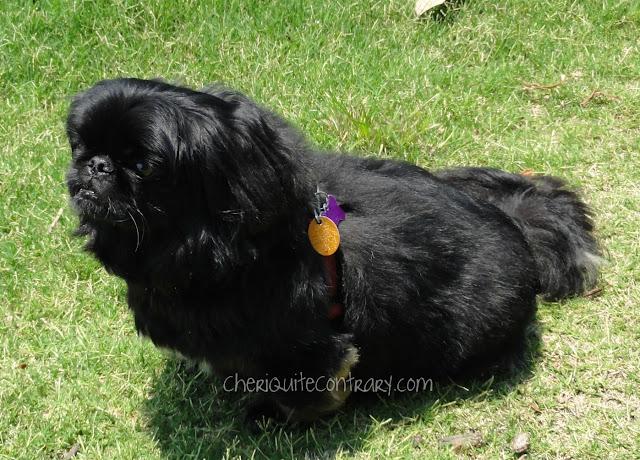 Best Dog Groomer Lexington Ky