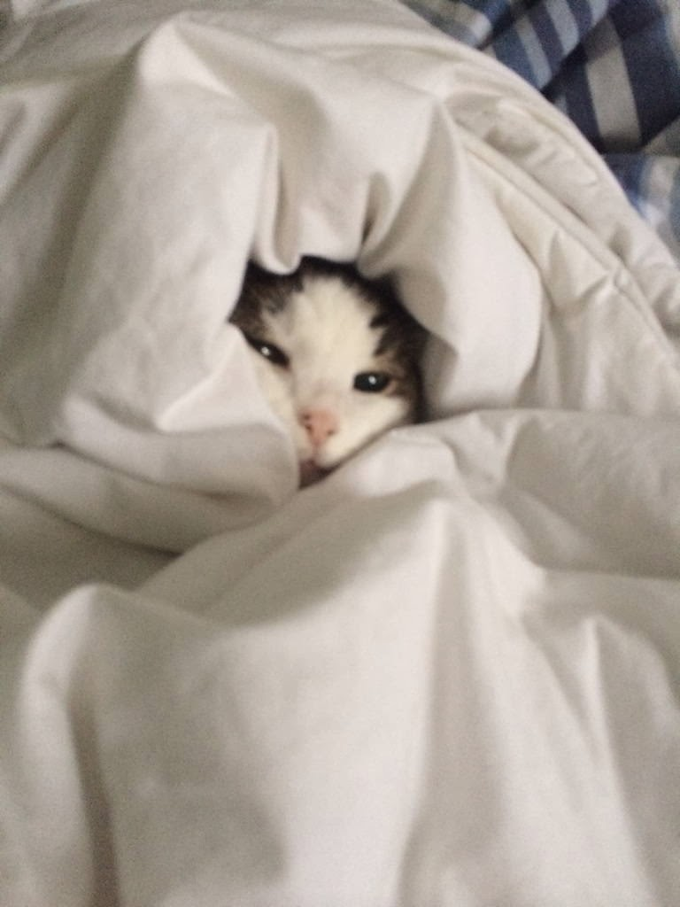 Funny cats - part 91 (40 pics + 10 gifs), cat covers himself with bedsheets