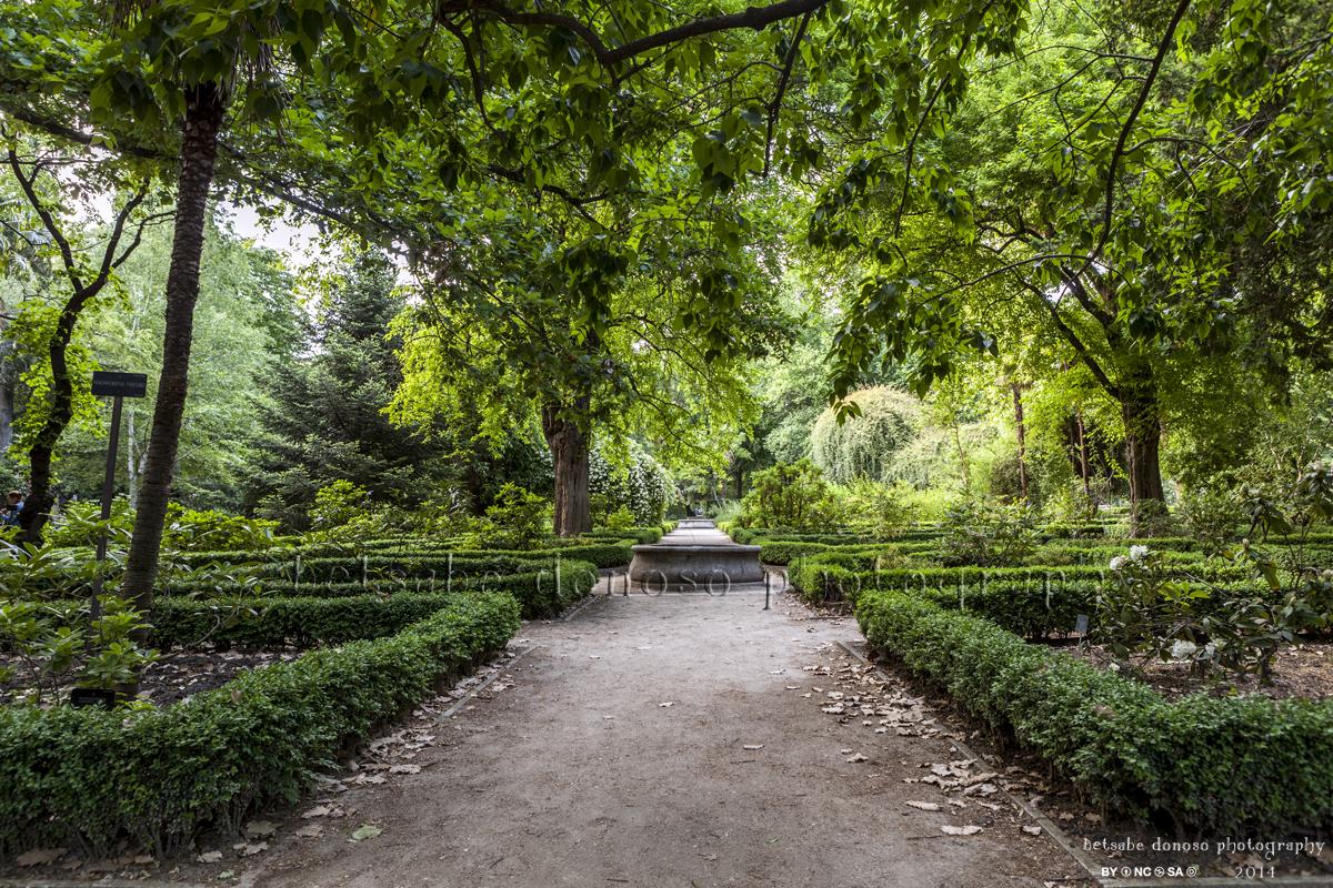Betsab donoso real jard n bot nico for Jardin botanico talleres