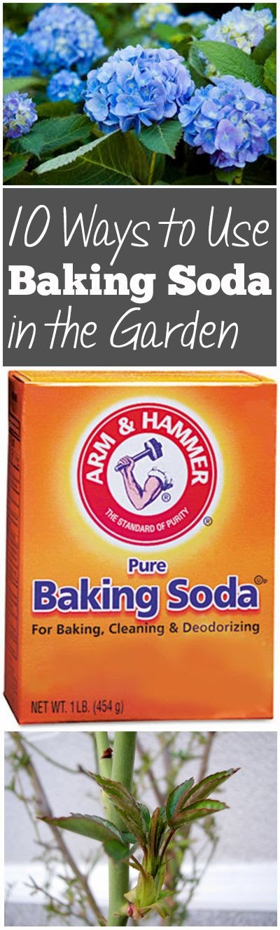 How to use baking soda in the garden gardening things - Unknown uses of baking soda ...