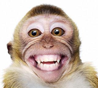 foto monyet ketawa - gambar binatang