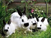 Rabbits Puzzle
