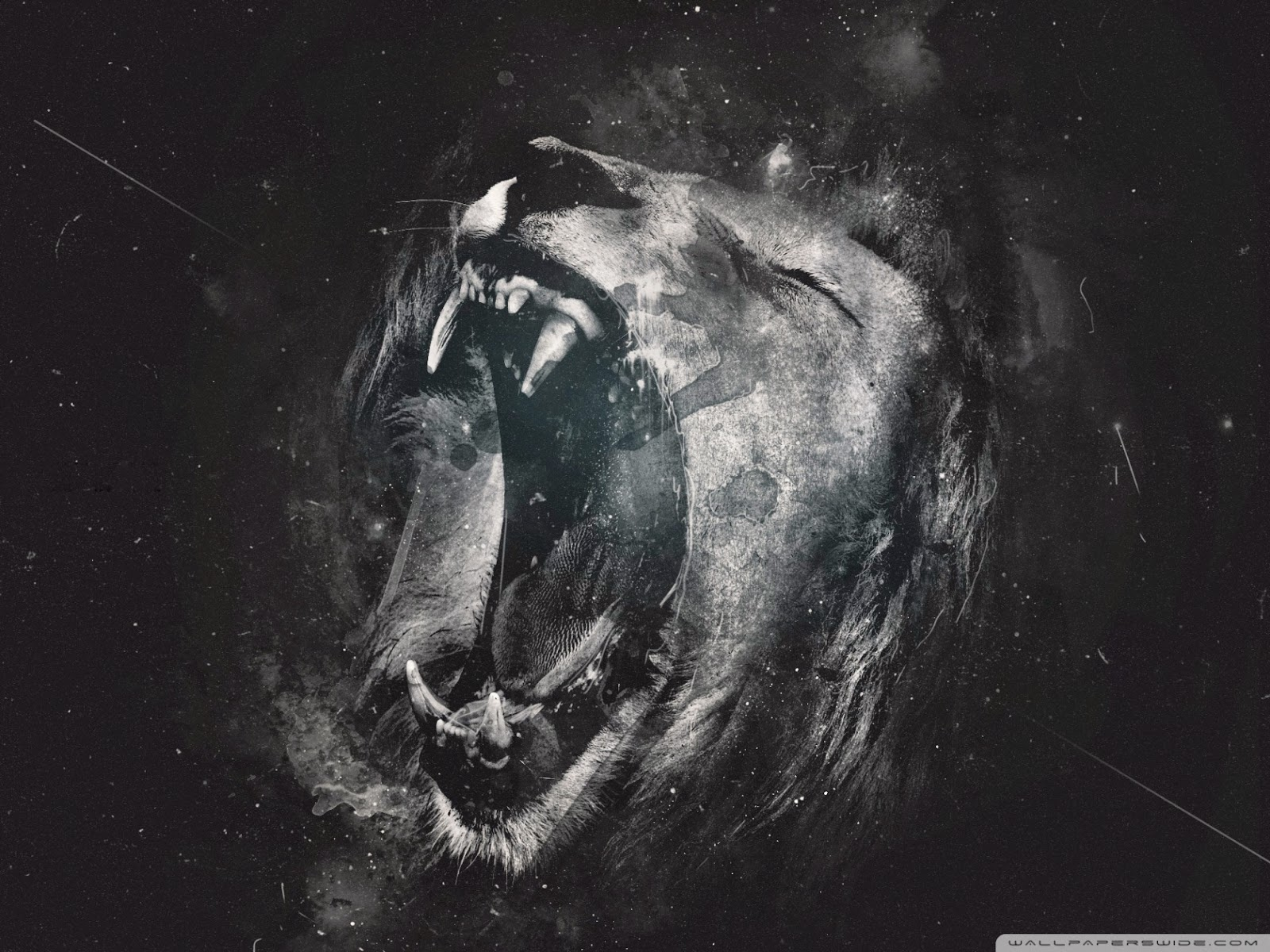 roar_3-wallpaper-1680x1260