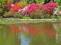 東神苑の咲耶池に映えるツツジ。