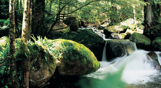 Mount Dandenong Ranges Australia  city photos gallery : Dandenong Ranges NATIONAL PARK