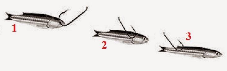 Cara Pasang Umpan Ikan