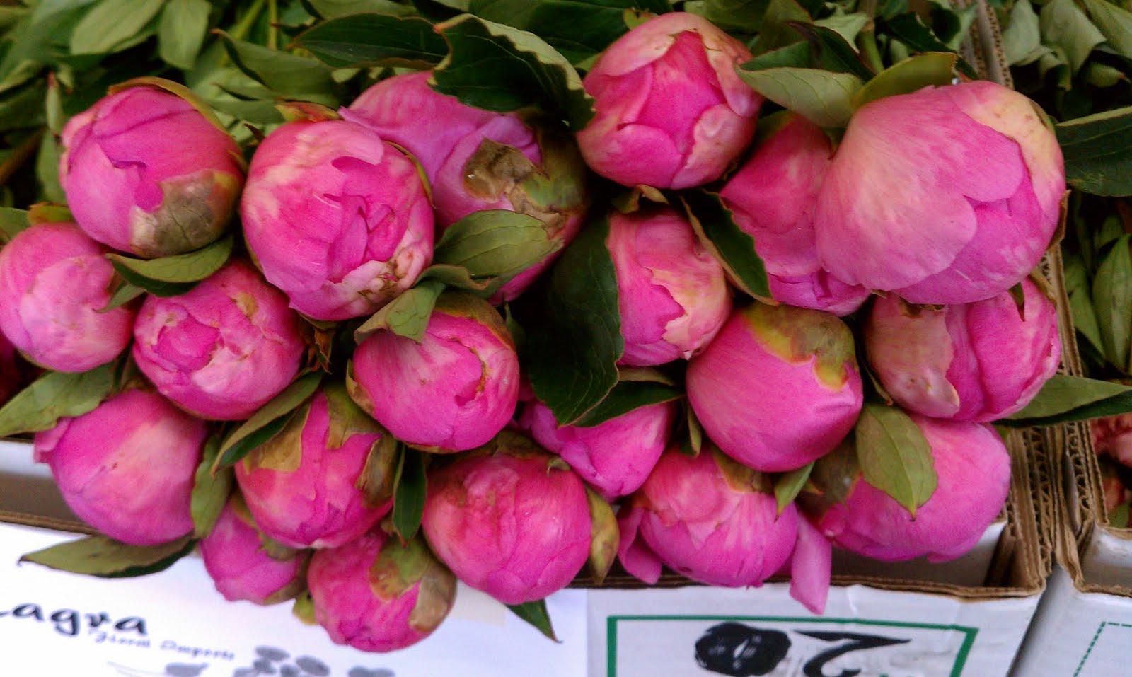 Milagrawholesaleflowersla Oregon Peonies Box Special