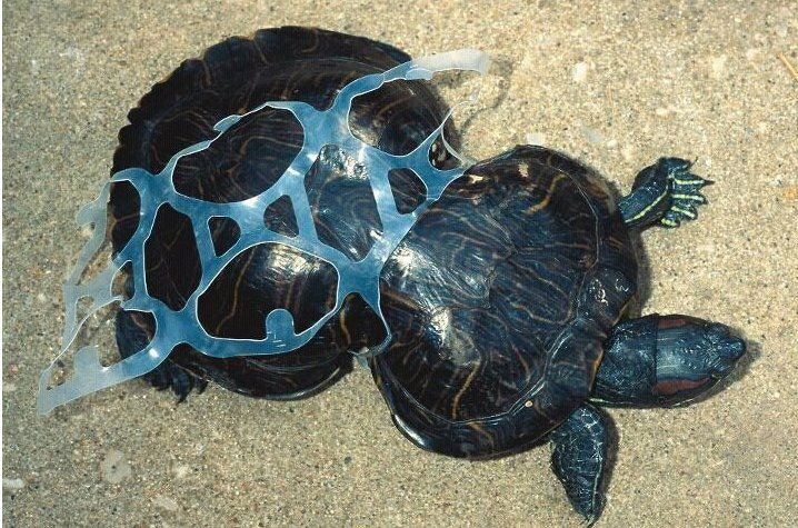 Plastic bags kill keep our oceans clean - What Is Here World System Review The Great Pacific