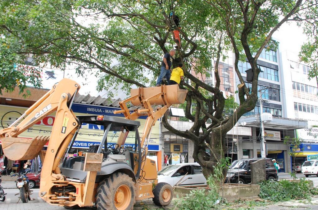 A equipe de Parques e Jardins atuou com serviços de poda de árvores na Reta