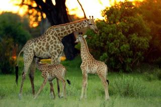 India wildlife tour package