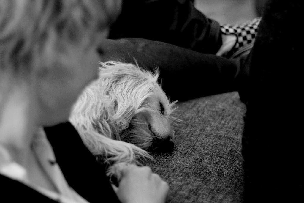 Mina Hund oh.sweebe