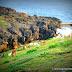 Basco: Fundacion Pacita