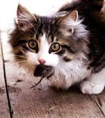 Ernährung Katze