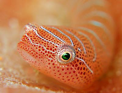 Beautiful small sea fish