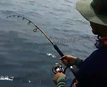 Gila Mancing Dapat Ikan Barracuda Monster Tak Makan Gancu