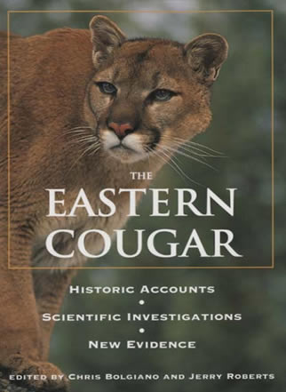 Are there cougars in new brunswick
