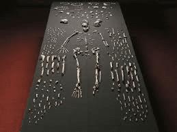 بقايا عظمية لهومو ناليدي